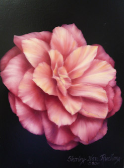 Pink Camellia